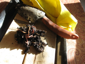 Worm Composting Not So Easy