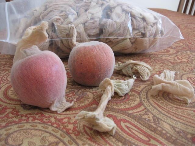 Organic Apple Trees