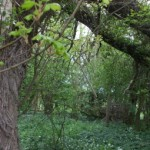 Soil Enhancement