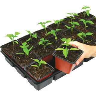 Plant Date Calculator